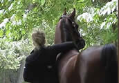 Riding Lessons - Boarding - Sales